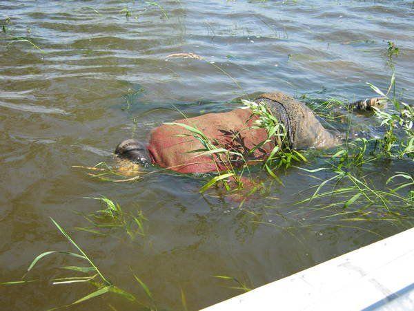 ВКузбассе рыбак выловил тело утопленника наТоми