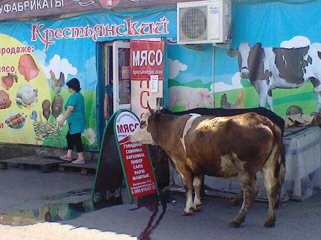 ВМеждуреченске корова пришла вмясной магазин