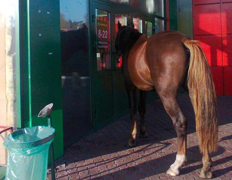 Всупермаркет Новокузнецка пришла лошадь