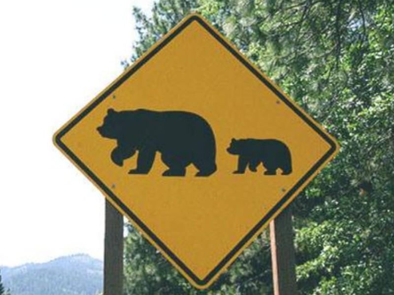 Шофёр сбил накузбасской трассе медведя